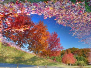 Reflecting on the change of seasons - NJ