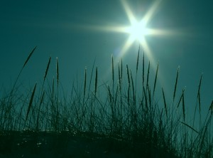 Starburst and Beach Grass On Turquoise free creative commons