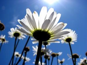 Sun Kissed...