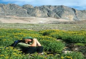 Absaroka-Beartooth Wilderness, Backpacker Viewing Wildlife