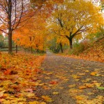 Does Your Home Get a Makeover When Fall Arrives?