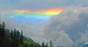 Rainbow Quilcene NFH1