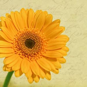 Birthday flower