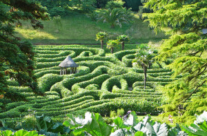 The Maze at Glendurgan
